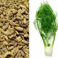 GROW TALLER FENNEL SEED