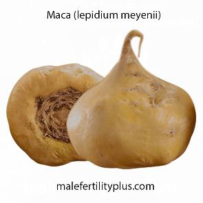 Lepidium meyenii, also known as maca or Peruvian ginseng proven to promote libido