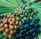 Saw_Palmetto_Berry_pills