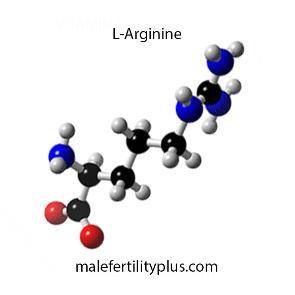 L-Arginine can increase sperm count